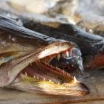 Fischfond selber machen